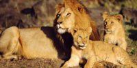 Manyara Serengeti  Ngorongoro.jpg