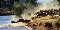 Maasai_Mara Wildebeat_Migration_n.jpg