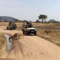 Friends_safari.jpg