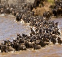 10-Day-Great-Wildebeest-Migration-Tracking.jpg2_.jpg